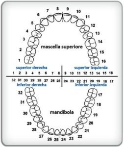 Piezas dentales numeradas universalmetne